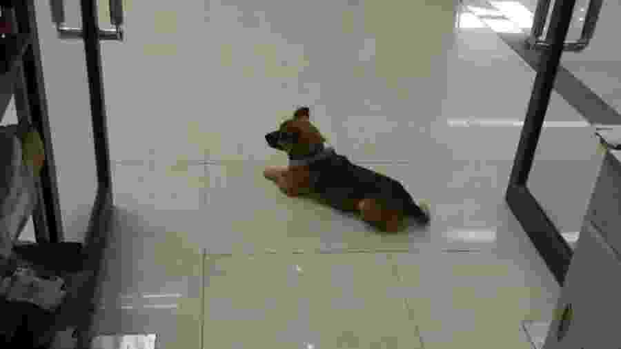 Cãozinho leal espera dono em hospital por quase três meses  - Reprodução/Facebook
