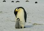 Cara de um, focinho do outro? Como os animais reconhecem seus filhotes (Foto: Siggy Nowak/ Pixabay)