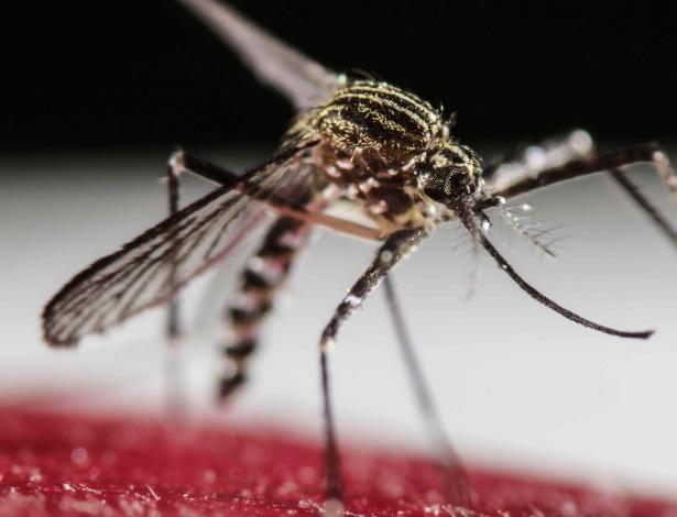 30.janeiro.2016 - Mosquito Aedes Aegypti na Costa Rica; zika vírus, mosquito  - EFE/Jeffrey Arguedas