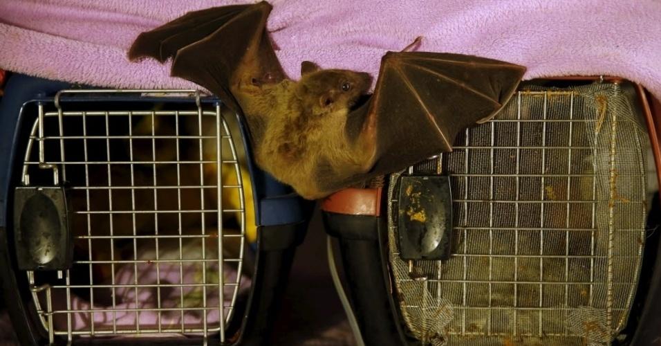 23.fev.2016 - Quando não estão voando pela sala, os cerca de 70 morcegos que Nora Lifschitz tem em sua casa em Tel Aviv ficam em caixotes feitos para transportar gatos e cachorros