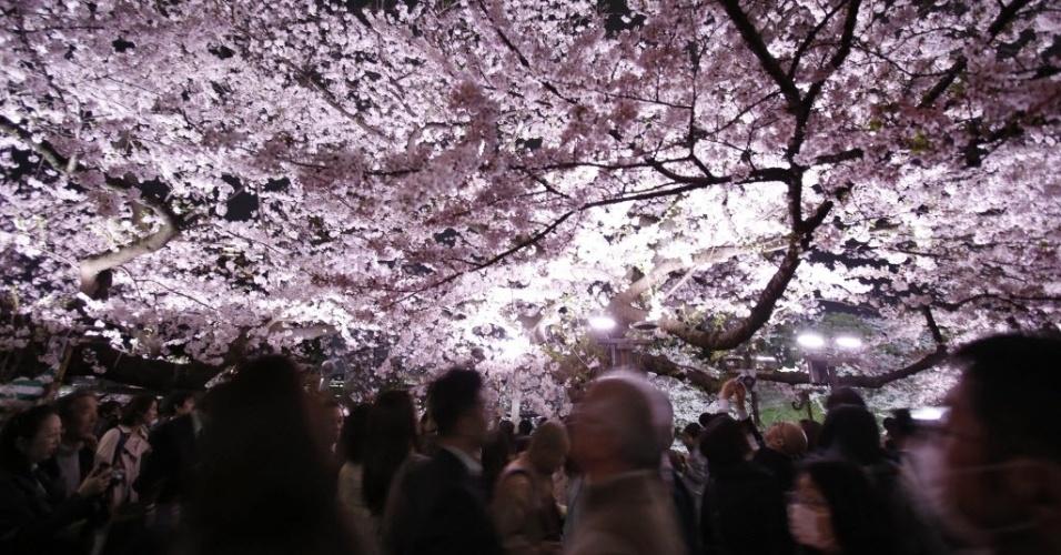6.abr.2016 - Visitantes fazem filas para olhar as cerejeiras em plena floração, em Tóquio, Japão