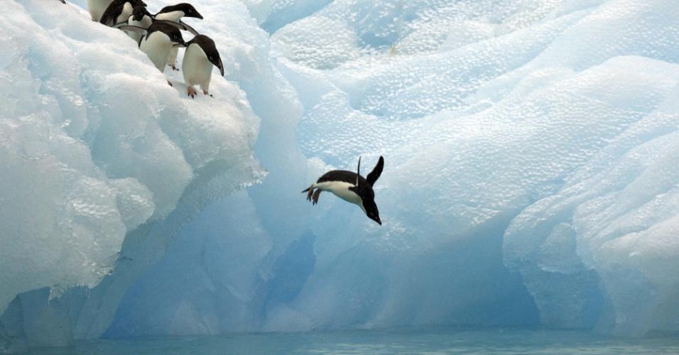 14.out.2016 - Pinguim salta para o mar na Antártica