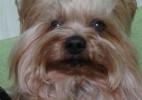 STJ dá a ex-marido direito de visitar cão, mas não iguala caso à guarda de filhos - Reprodução/Facebook