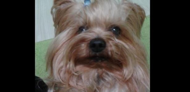 Cão da raça Yorkshire, chamado Theo, foi morto em Porto Alegre após levar chute