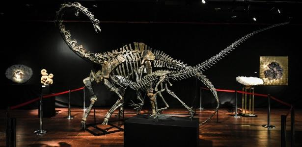 Na imagem, os esqueletos de dois dinossauros de idade jurássica (161-145 milhões de anos), um Diplodocus (costas) e um Allosaurus (frente) foram exibidos em 6 de abril de 2018, antes de serem leiloados em 11 de abril na casa de leilões Drouot, em Paris.