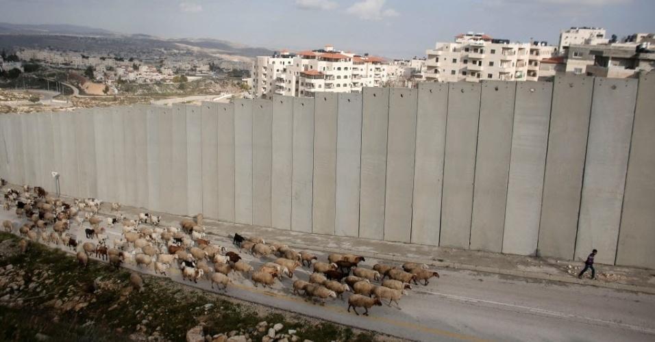 15.jan.2016 - Um jovem pastor conduz seu rebanho no campo de refugiados de Shuafat, região palestina separada de Jerusalém oriental pelo enorme muro construído por Israel