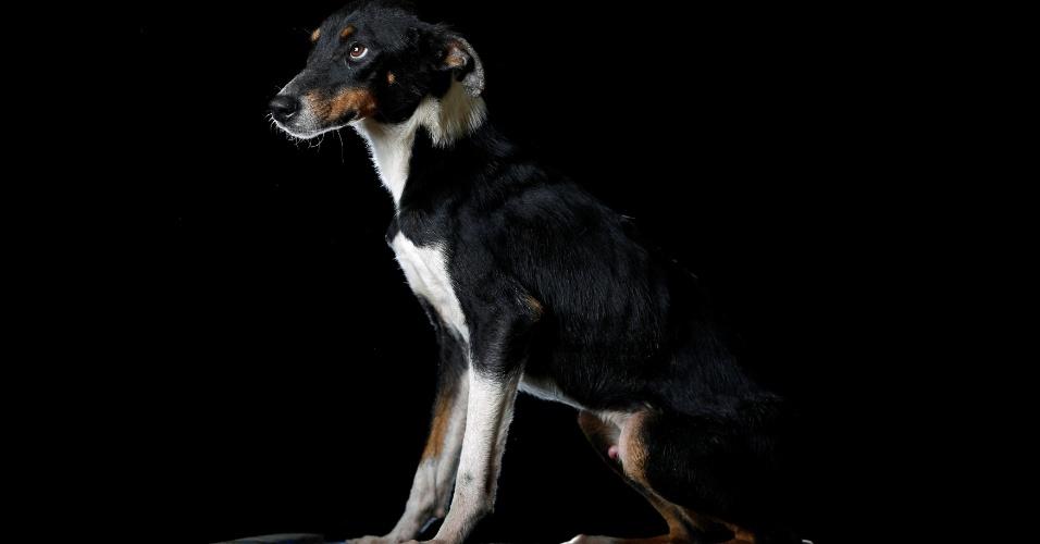 """LUCHO - """"Alguém o deixou junto com seus três irmãos em uma caixa de papelão na porta do abrigo há um ano e meio. Dois deles morreram e um foi adotado por uma família. Ele é um dos favoritos no abrigo, mas é um escapista, tem uma habilidade incrível de fugir de qualquer lugar"""", diz Maria Silva, que cuida dos cachorros no abrigo Famproa em Los Teques, na Venezuela"""