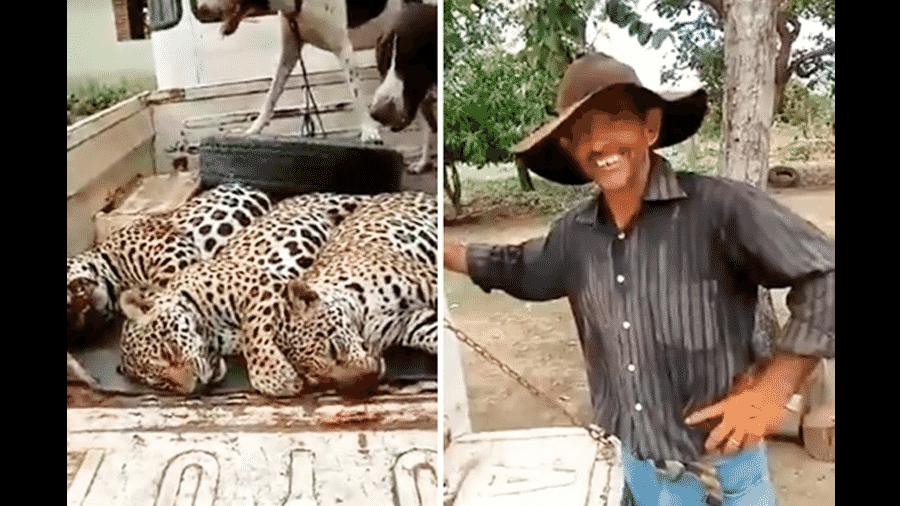 Imagens de vídeo que circula na internet com os três animais mortos - Reprodução