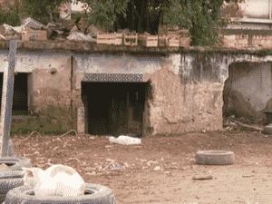 Terreno abandonado de Joãozinho da Gomeia - Reprodução de vídeo - Reprodução de vídeo