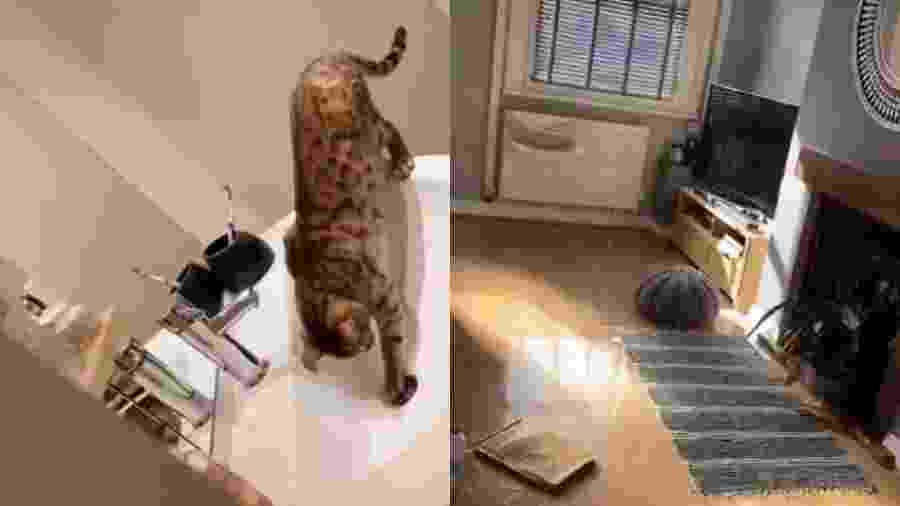 """A mulher compartilhou um vídeo coma """"brincadeira"""" deAmber e o resultado da casa completamente inundada - Reprodução/Twitter/@JasminStork"""
