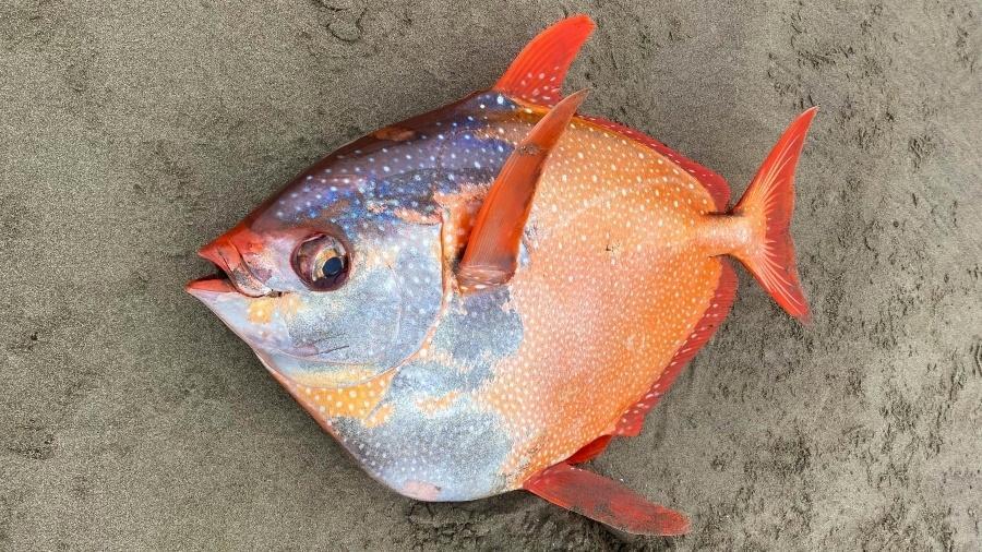 Imagem do peixe inusitado encontrado na costa americana - Reprodução/Facebook/Seaside Aquarium