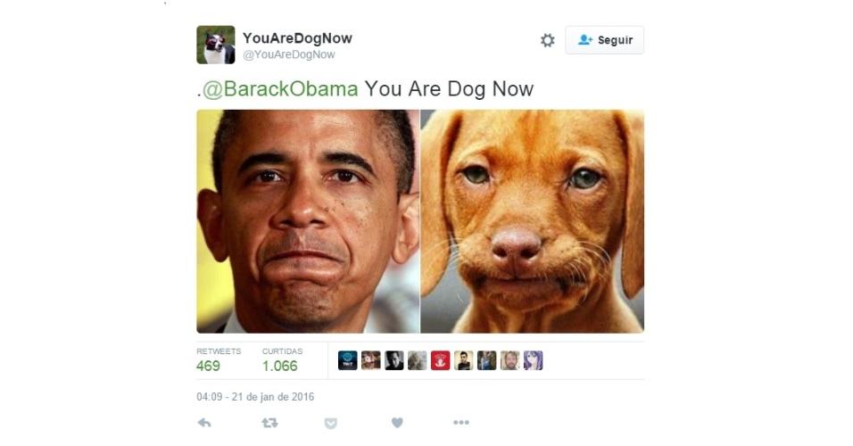 """5.fev.2016 - A conta do Twitter @YouAreDogNow tem como objetivo comparar fotos de pessoas com seus """"gêmeos"""" caninos. """"Siga-me e envie uma foto de si mesmo de sua turma, eu vou fazer de você um cachorro"""", diz a descrição."""