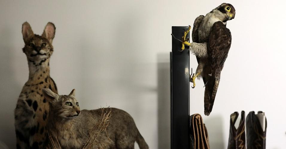 28.dez.2017 - O tráfico e comércio de produtos e espécies de animais ameaçados de extinção é combatido pelas autoridades no aeroporto de Heathrow, em Londres. Veja nas fotos o que comerciantes ilegais levavam na mala