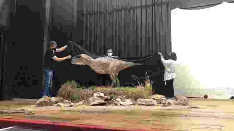 Pesquisadores de Monte Alto (SP) apresentam a reconstrução do Kurupi itaata - Museu De Paleontologia De Monte Alto - Museu De Paleontologia De Monte Alto