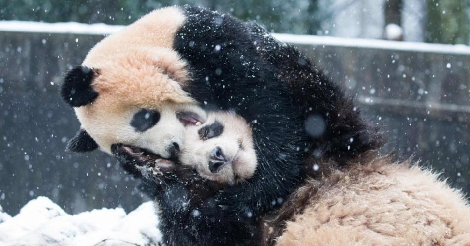 22.jan.2016 - Dois pandas brincam na neve em um zoológico em Hangzhou, na China. As aulas foram suspensas e estradas fechadas enquanto o país se prepara para a chegada da pior onda de frio dos últimos 30 anos
