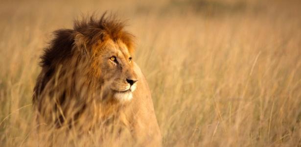 Candidatos a estudar biologia devem discorrer sobre os leões e sua juba