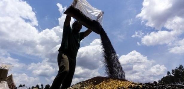 O projeto utiliza a Muvuca, como é chamada a técnica de plantio com mistura de sementes de diferentes espécies para recuperação ambiental de áreas degradadas