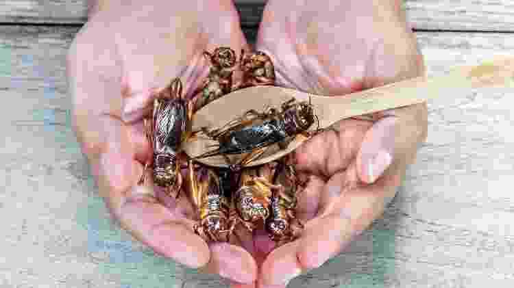 inseto; alimentação; dieta; comida; comer inseto - Getty Images/iStockphoto - Getty Images/iStockphoto