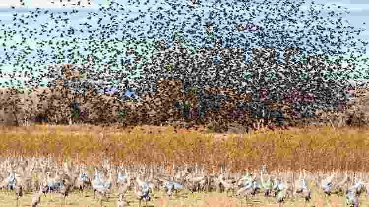 Sabe-se que 118 espécies de aves fazem a migração norte-sul nas Américas - Getty Images - Getty Images