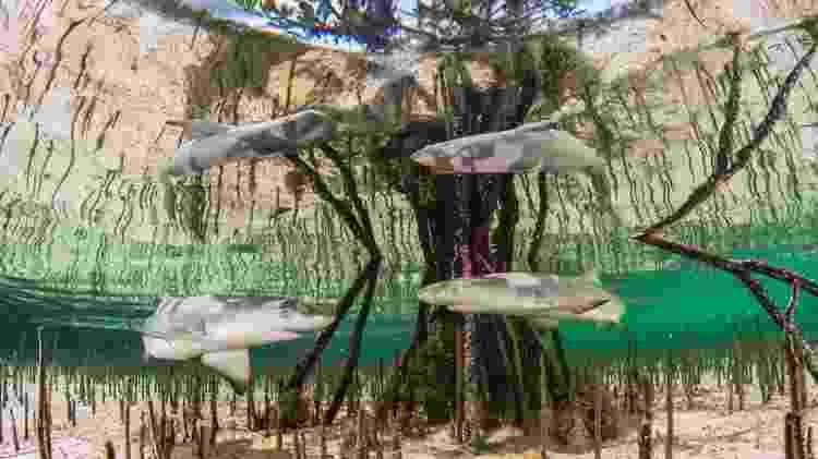 Anita Kainrath, da Áustria, venceu uma das categorias com a imagem 'Shark Nursery', que mostra filhotes de tubarões-limão em um mangue nas Bahamas - Anita Kainrath - Anita Kainrath