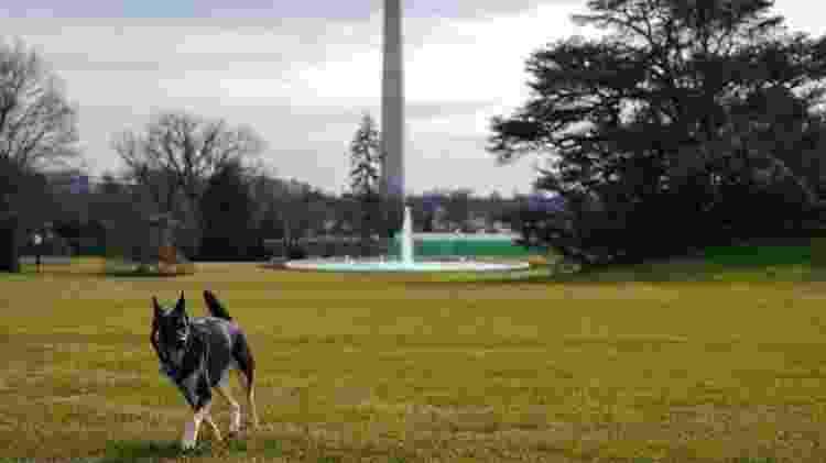 Major foi adotado em uma ONG que cuida de animais abandonados - Adam Schultz/Casa Branca - Adam Schultz/Casa Branca