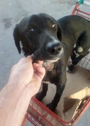 O cachorro, que foi resgatado próximo à avenida Brasil, passa bem