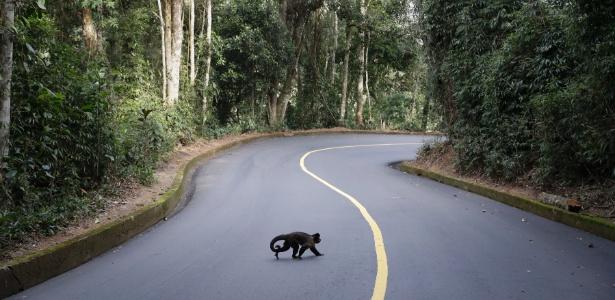 Macaco no Parque Nacional da Tijuca