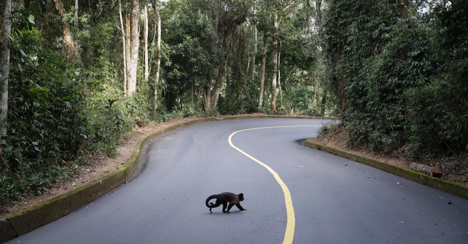 6.ago.2016 - Macaco cruza rodovia da Vista Chinesa, no Rio, durante prova de ciclismo dos Jogos Olímpicos