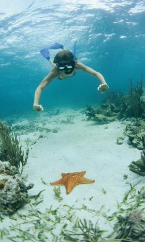 6.set.2016 - Um mergulhador nada em direção a uma estrela-do-mar em Belize. Estes animais não são peixes, são equinodermes: animais aquáticos simétricos com pele áspera