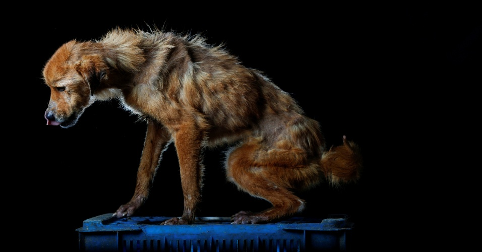 """LA CHINA - La China morreu uma semana após essa foto ser tirada. """"A cachorra, amorosa mas muito medrosa, não gostava de deixar o espaço onde dormia nem mesmo para comer"""", disse Maria Silva, que cuida dos cachorros do abrigo em Los Teques, na Venezuela"""