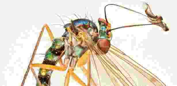 As moscas fazem parte de cada fio da rede da vida - Natural History Museum/NYT