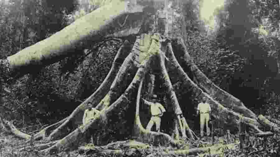 Só 3% da madeira derrubada na Mata Atlântica para dar lugar a fazendas foi aproveitada; em geral, matas eram incendiadas e transformadas em pastos para prepará-las para a agricultura, assim como hoje ocorre na Amazônia - Museu Histórico da Imigração Japonesa no Brasil via BBC