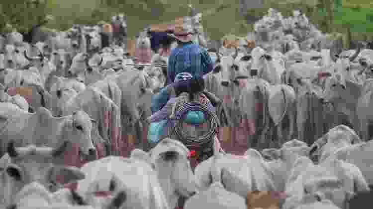 Nas estradas que cortam a imensa fazenda Lagoa do Triunfo é comum cruzar com manadas de boi - João Laet/Repórter Brasil e The Guardian