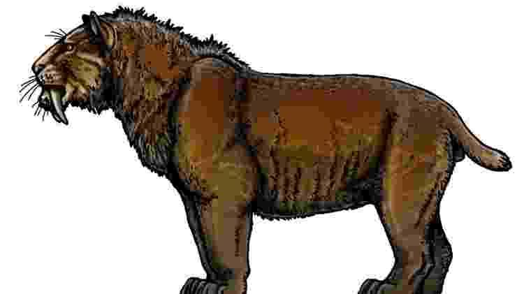 Smilodon populator, um felino maior do que leões e tigres modernos, chegava a pesar 400 kg - FELIPE A. ELIAS/PALEOZOO BRAZIL