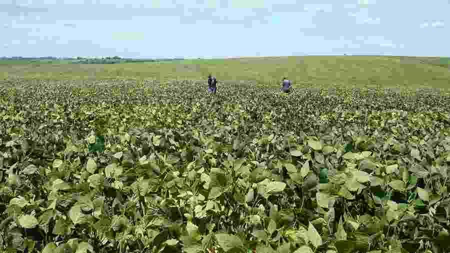 Agrônomos checam área plantada com soja no Rio Grande do Sul - Staff Photographer