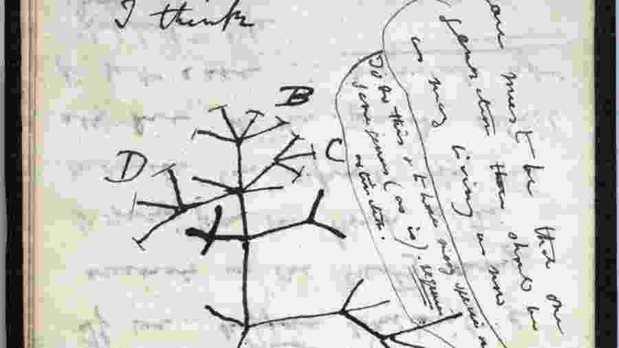 """Desenho da """"árvore da vida"""", que se tornou o símbolo da teoria da evolução de Darwin - AFP PHOTO / UNIVERSITY OF CAMBRIDGE"""