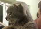 Feline Care Cat Rescue/Facebook/Reprodução