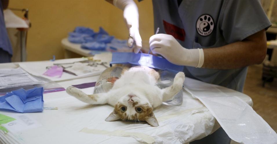 26.fev.2016 - Gato passa por operação em Cuba durante campanha de comunidade para esterilização e retirada de parasitas em pets da cidade de Havana, capital do país. O felino nem ligou e ainda fez pose para a foto