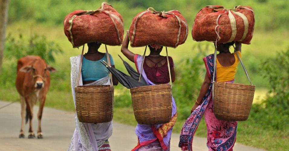 22.ago.2016 - Mulheres carregam cestos com chá no Estado de Nagaon, na Índia