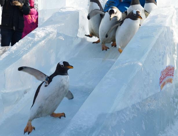 """26.dez.2016 - Manobras """"radicais"""" fazem parte da diversão de pinguins que aproveitam esta segunda (26) para deslizar em um escorregador de gelo no parque temático Harbin Polarland, na China"""