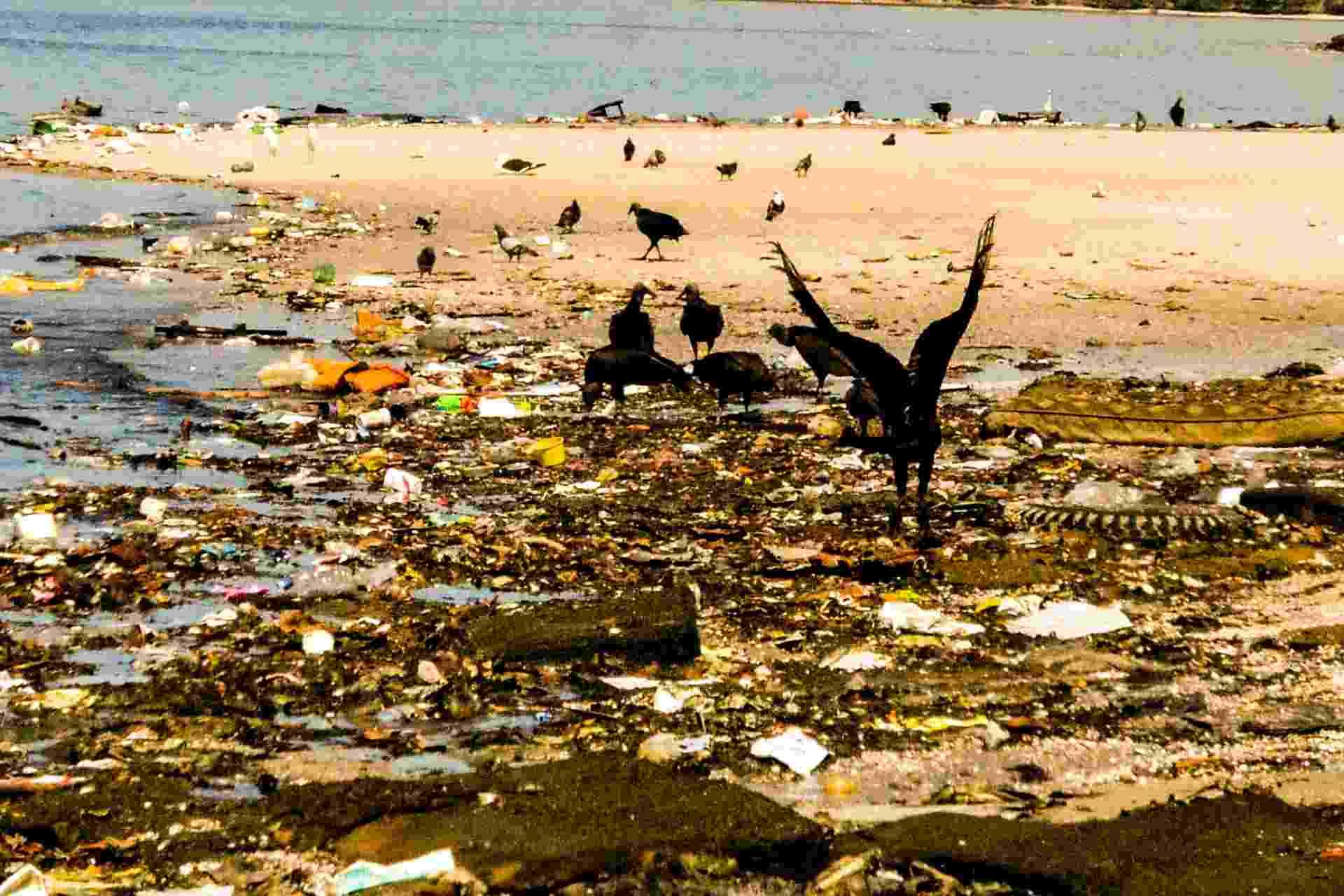 30.ago.2015 - Urubus pousam sobre lixo acumulado na baía de Guanabara, no entorno da Ilha do Governador, próximo ao Aeroporto Internacional Tom Jobim (Galeão), no Rio de Janeiro  - undefined