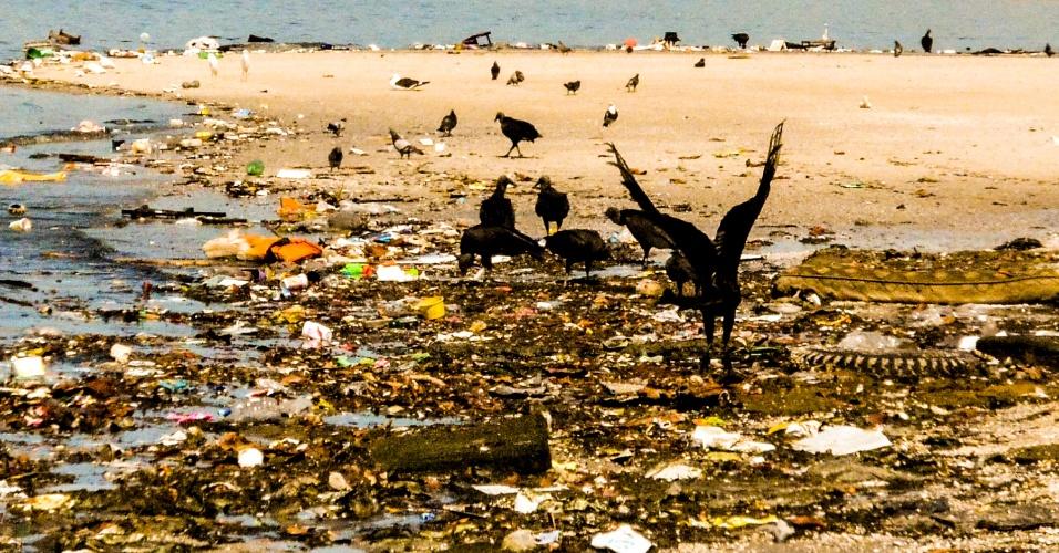 30.ago.2015 - Urubus pousam sobre lixo acumulado na baía de Guanabara, no entorno da Ilha do Governador, próximo ao Aeroporto Internacional Tom Jobim (Galeão), no Rio de Janeiro