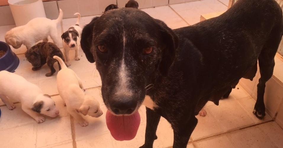 Uma cadela deu à luz 11 filhotes em um cemitério de Brasília. Mais que isso, eles nasceram dentro de um túmulo