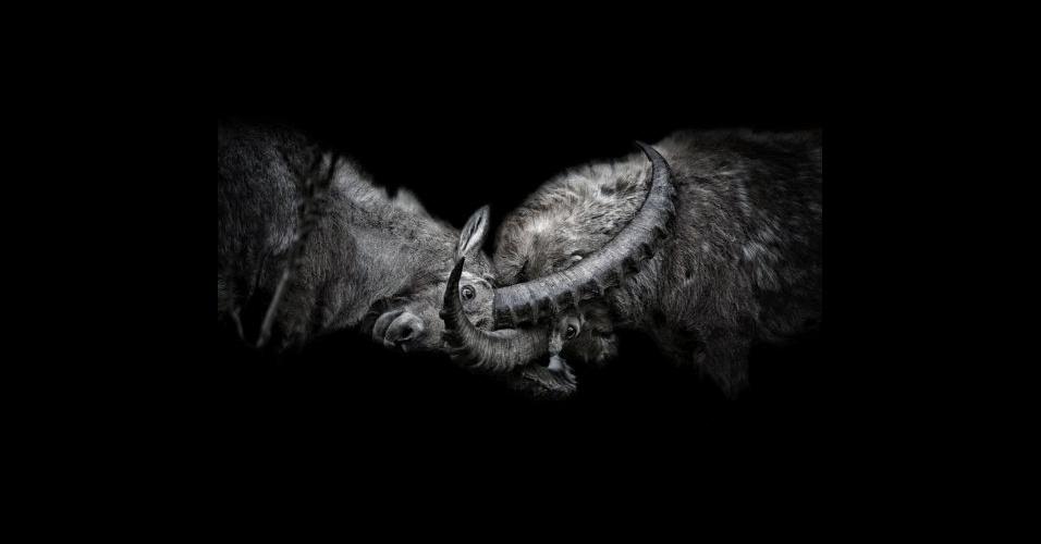 31.mai.2016 - Gotsch fez fotografias da vida selvagem dentro de uma caverna camuflada no vale de Engadin, nos Alpes Suíços