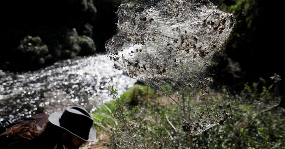 8.nov.2017 - A ciência e a natureza se juntaram para criar uma paisagem incomum: o riacho de Soreque contém resíduos em suas águas, ricas em nutrientes, o que aumenta a proliferação de mosquitos. Eles servem de alimento para as aranhas, que se reproduzem em multidão