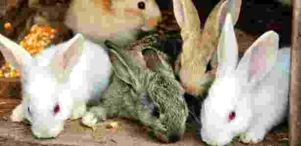 Aproximadamente cem coelhos foram mortos a pauladas nos últimos seis meses na pequena Minihy-Tréguier - Getty Images/iStockphoto