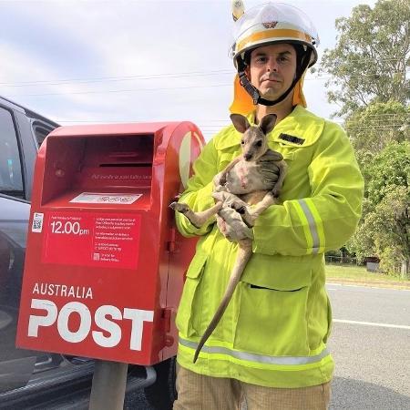 Os bombeiros que resgataram o filhote de canguru publicaram uma imagem do animal ao lado da caixa do correio em que ele foi colocado - Reprodução/Facebook/Queensland Fire and Emergency Services