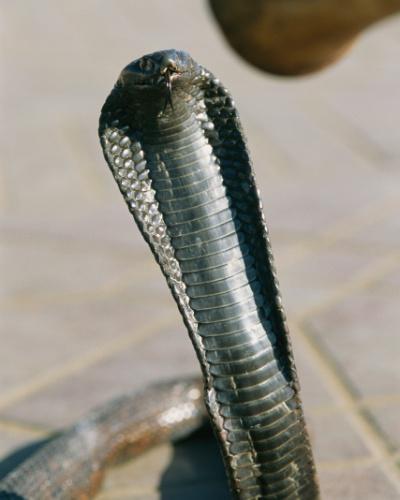 5.set.2016 - Uma serpente