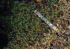 AFP PHOTO / ASSEMBLEA NACIONAL CATALANA / ROSER VILALLONGA