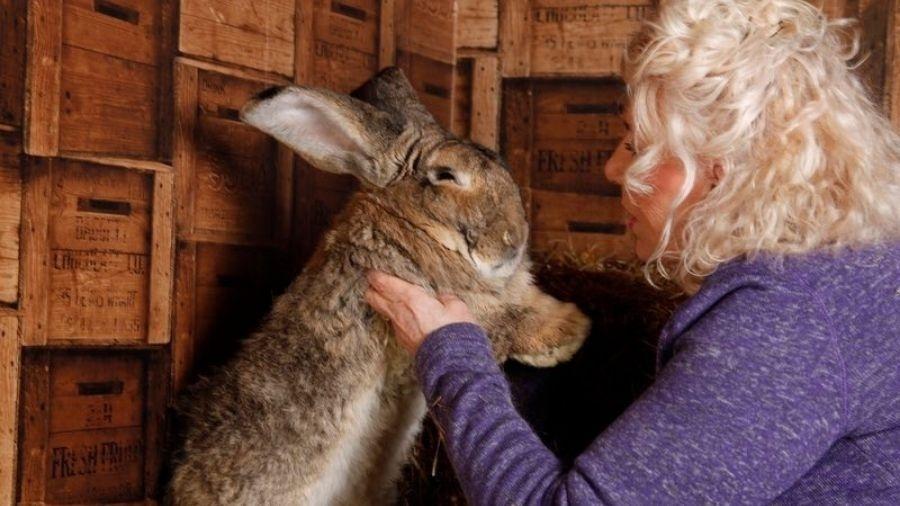 Ex-modelo da Playboy e seu coelho gigante, Darius - Reprodução/Twitter